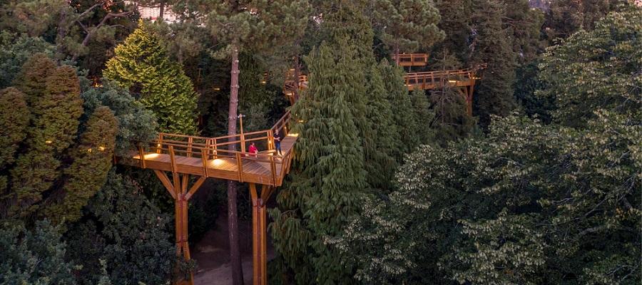 Serralves possui novo Passadiço elevado ao nível das copas das árvores