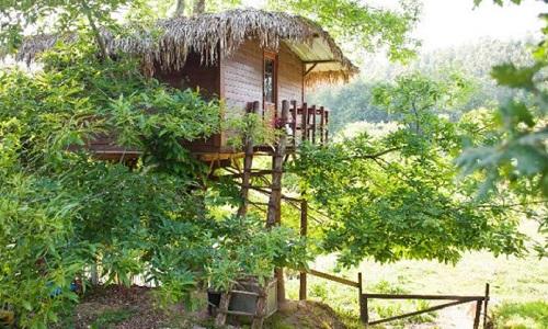 Casas de Árvore para dormir em Portugal